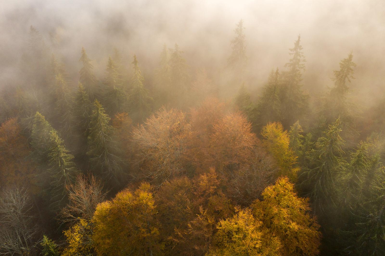 Nature - Photo 30