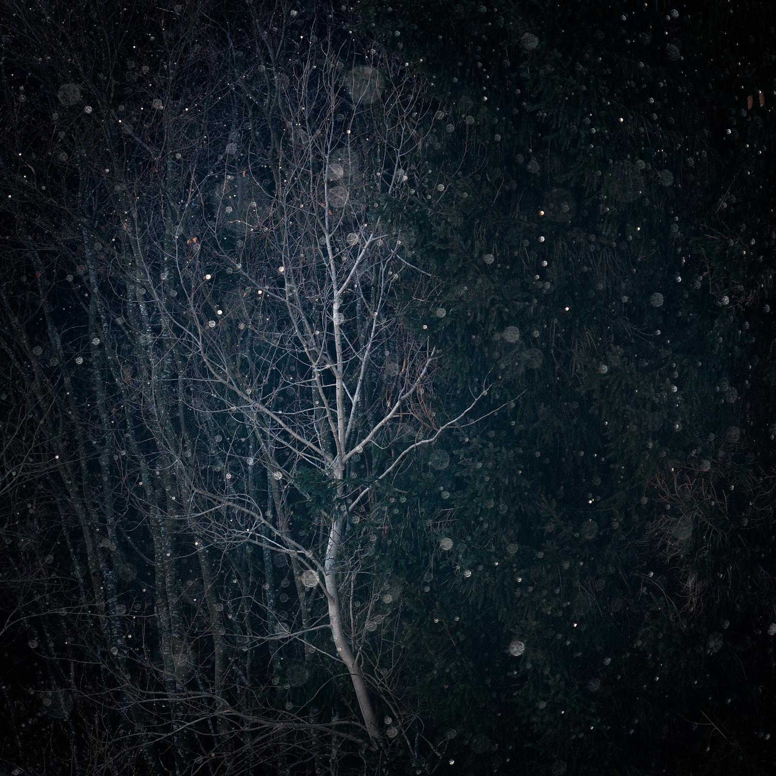 Nature - Photo 21