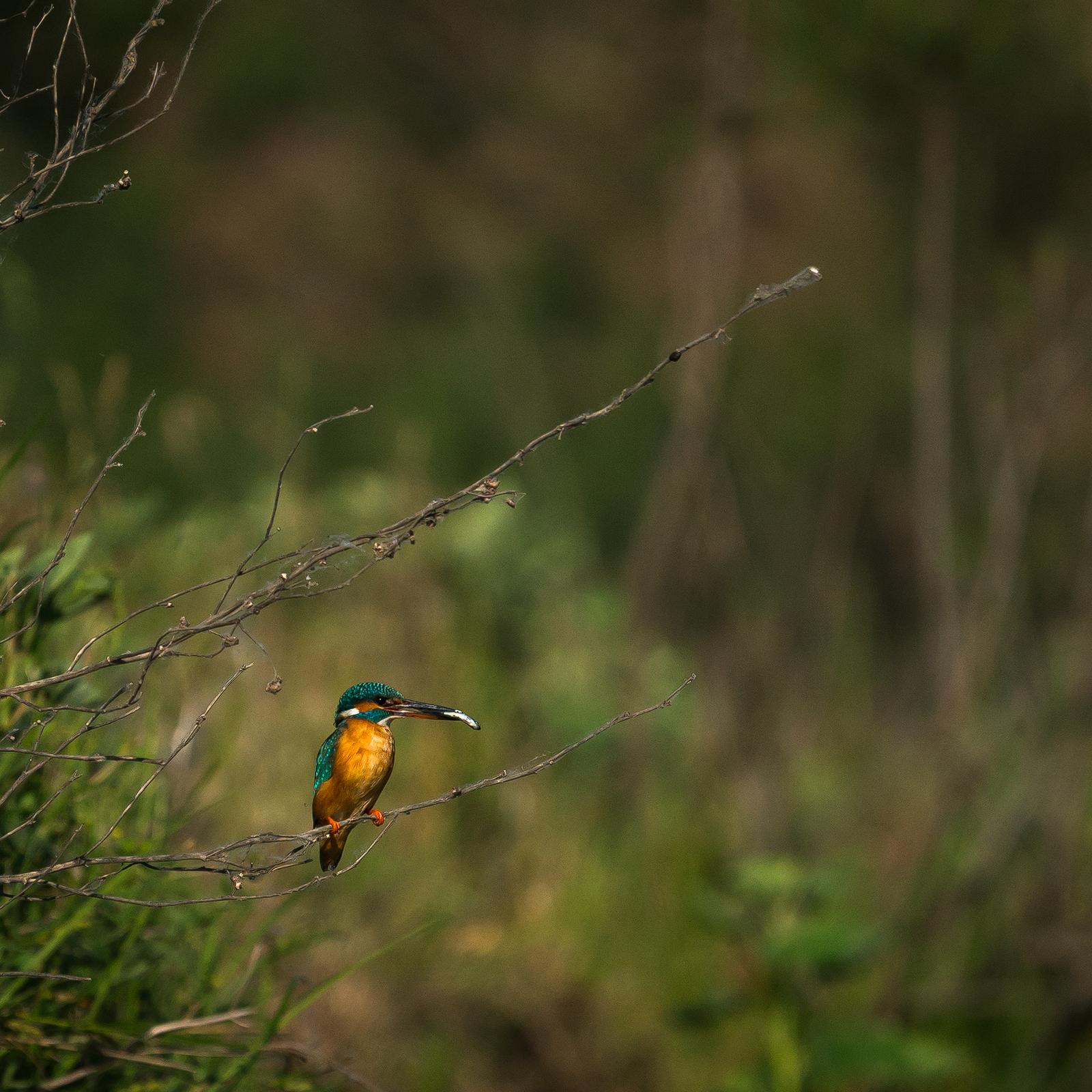 Wildlife - Photo 6