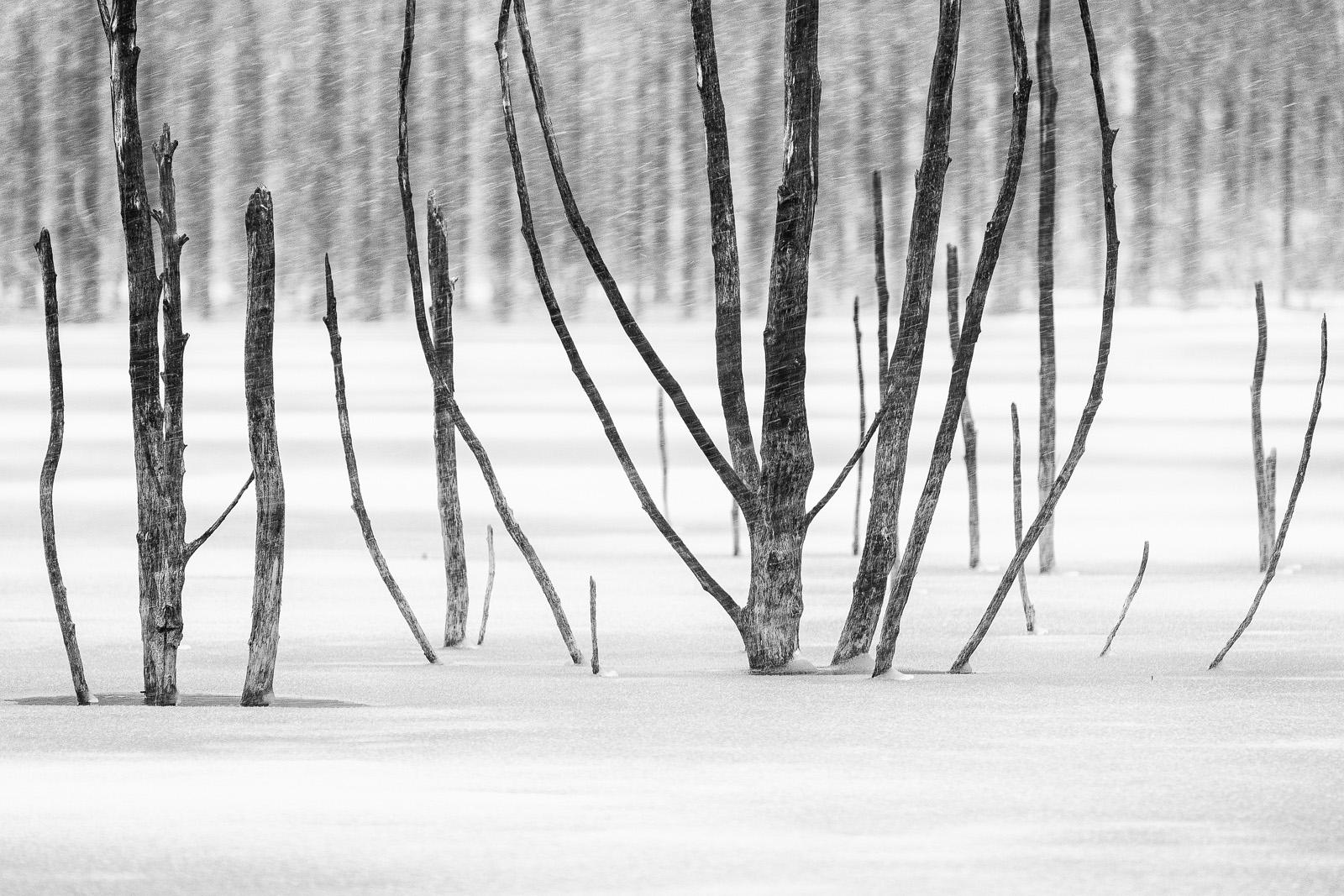 Black & White - Photo 18