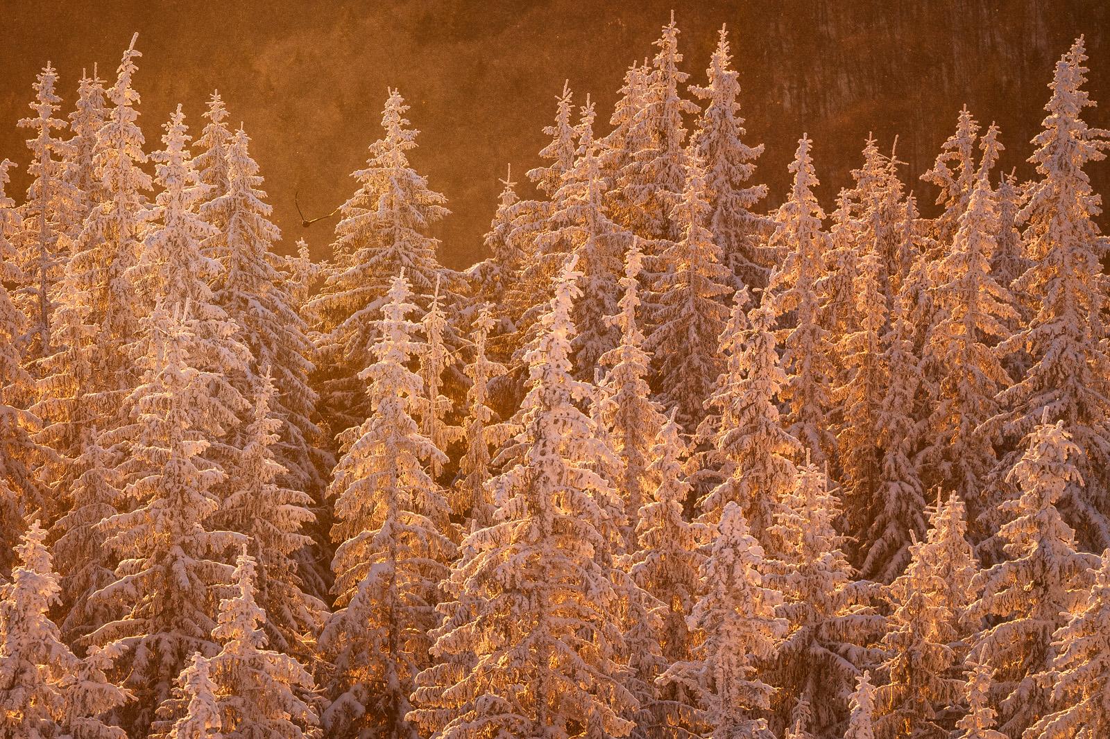 Nature - Photo 32
