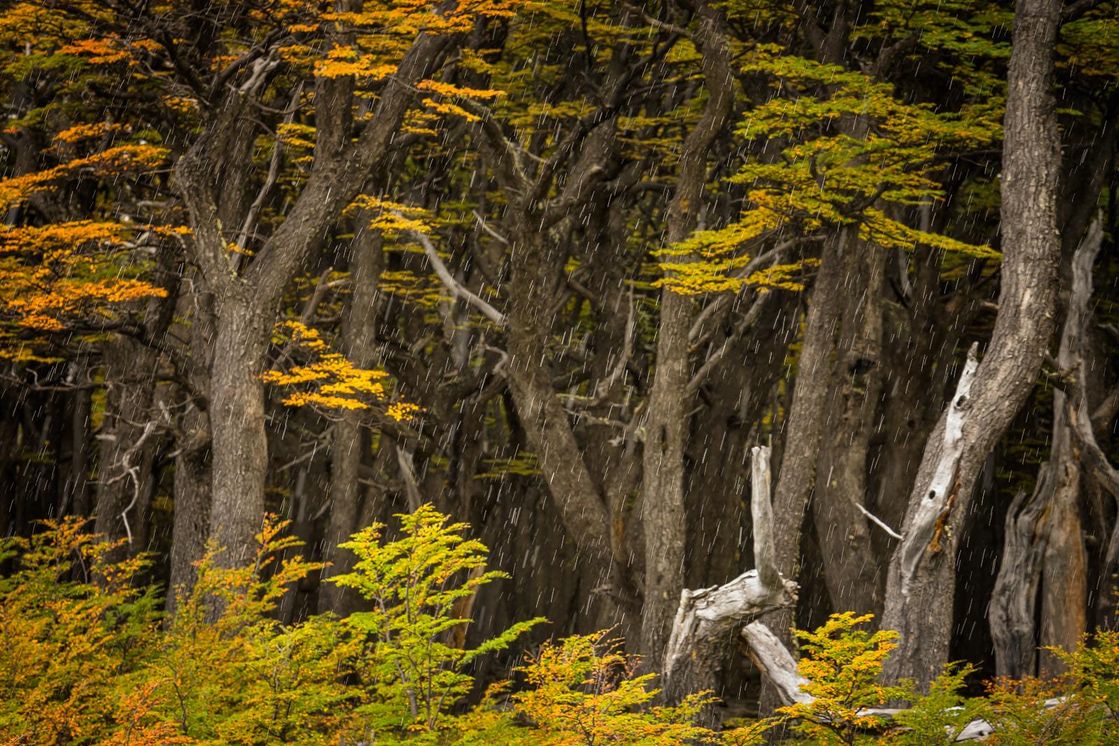 Nature - Photo 24