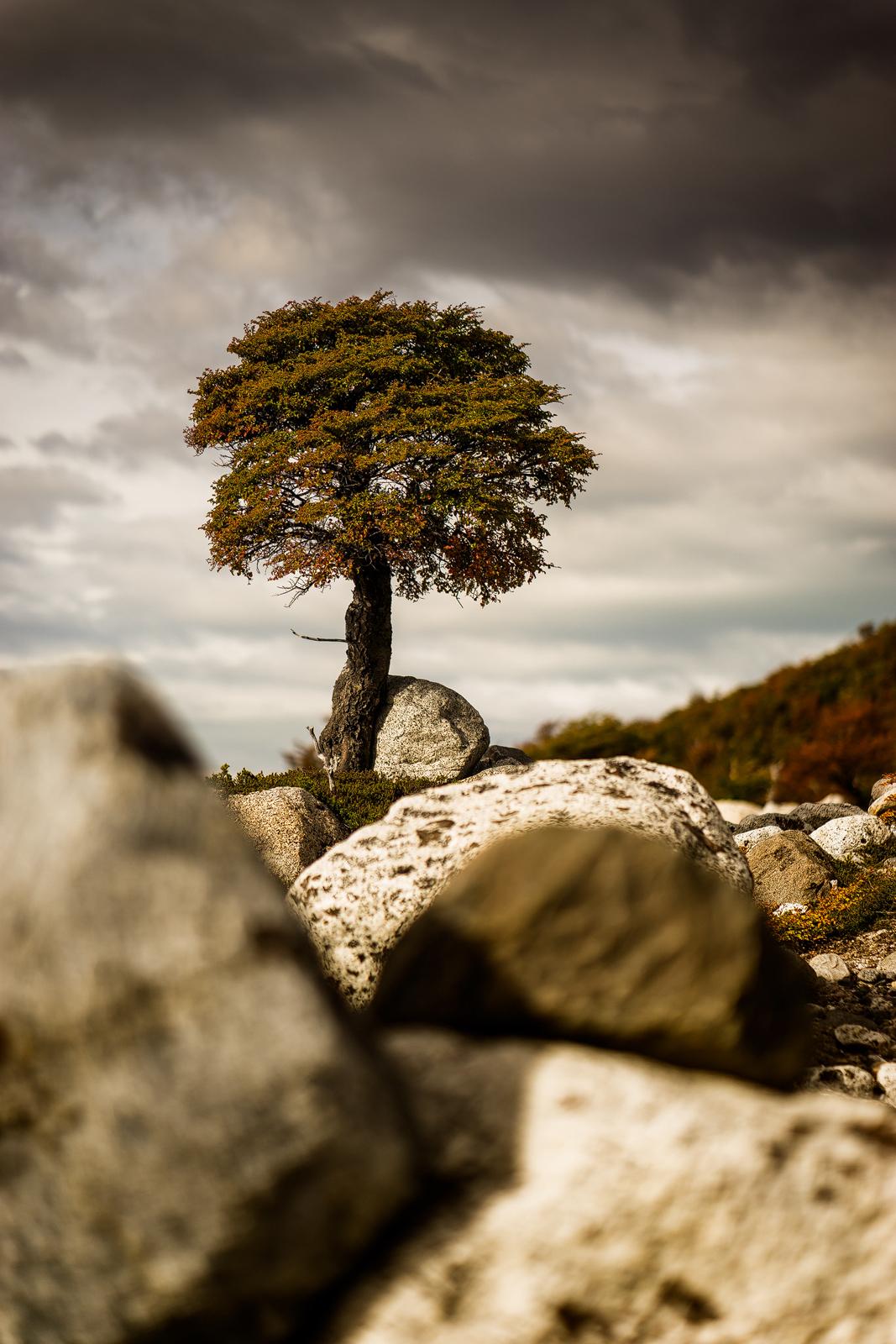 Nature - Photo 23