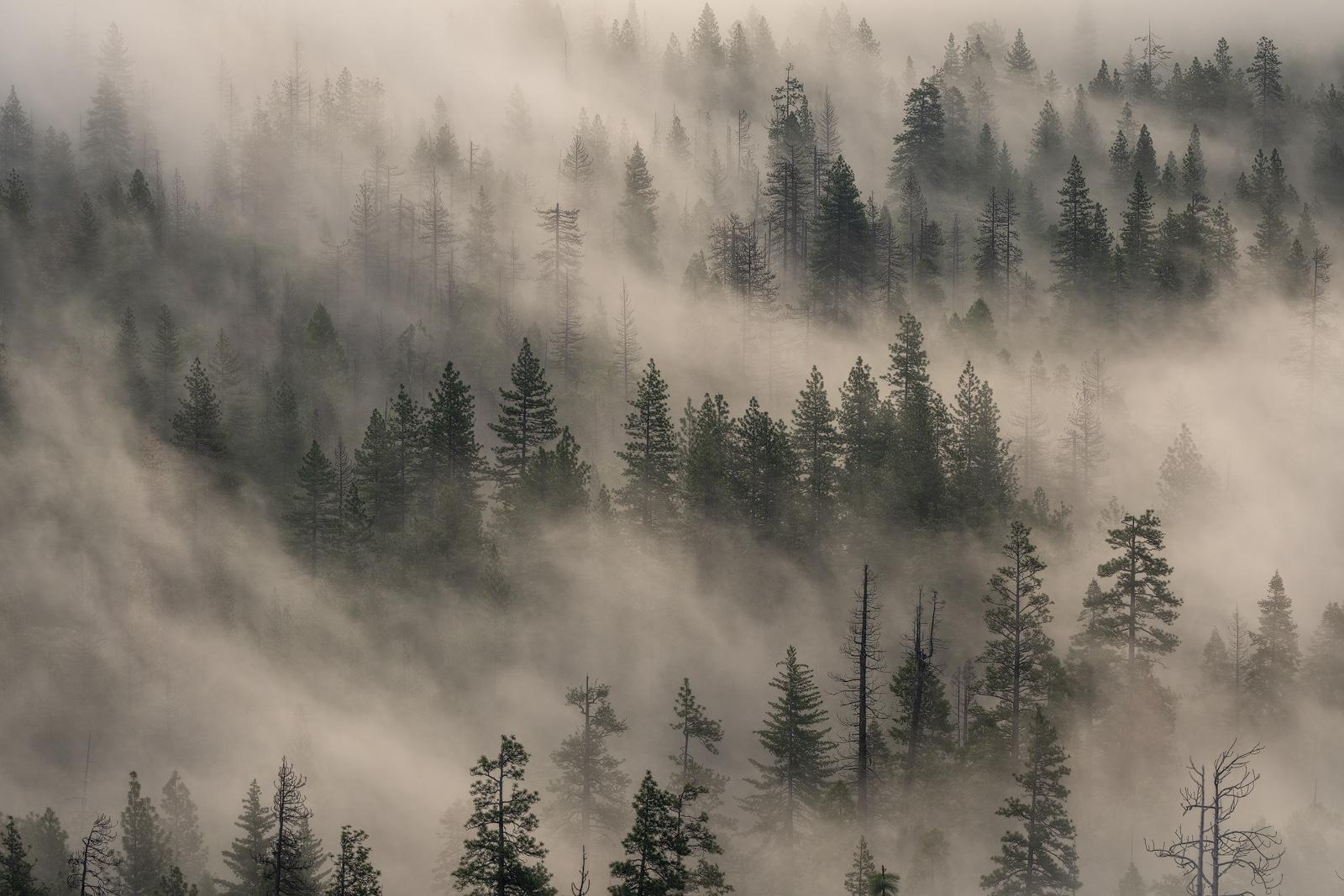 Nature - Photo 33