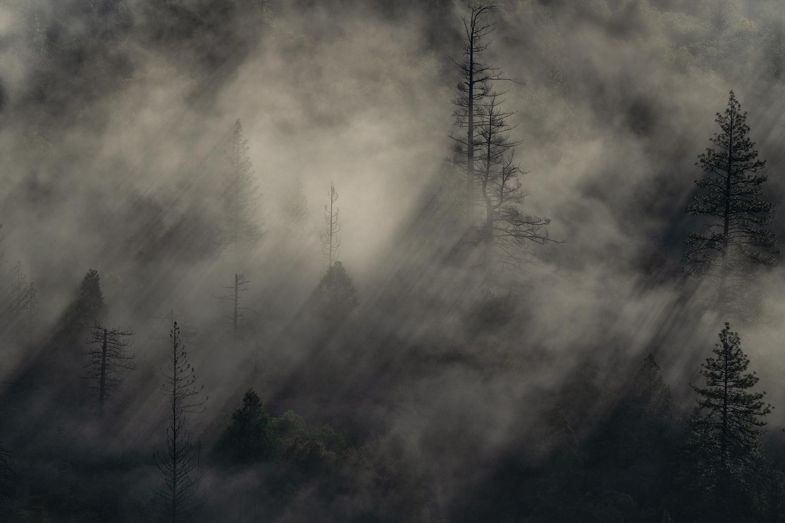 Nature - Photo 20