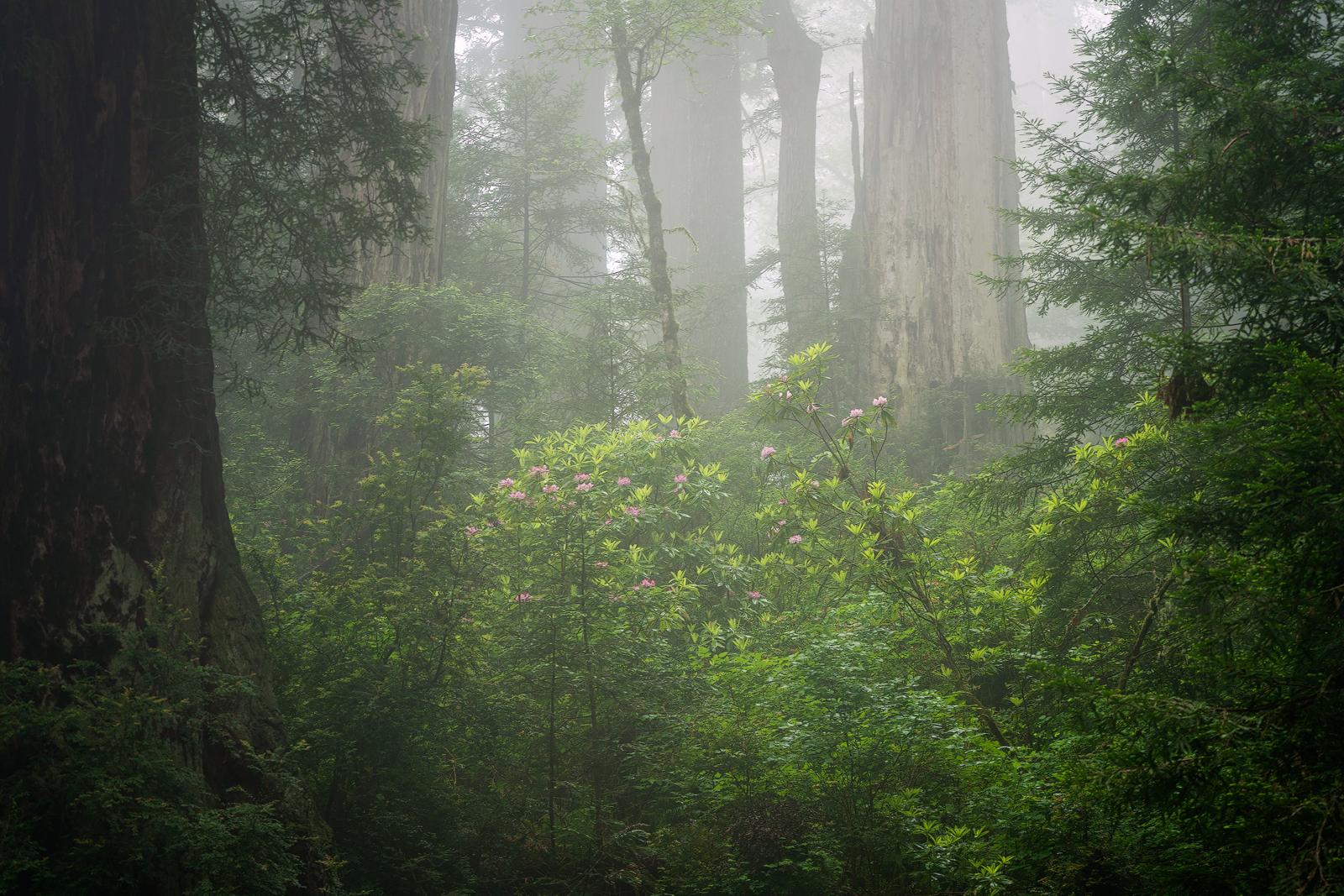 Nature - Photo 6