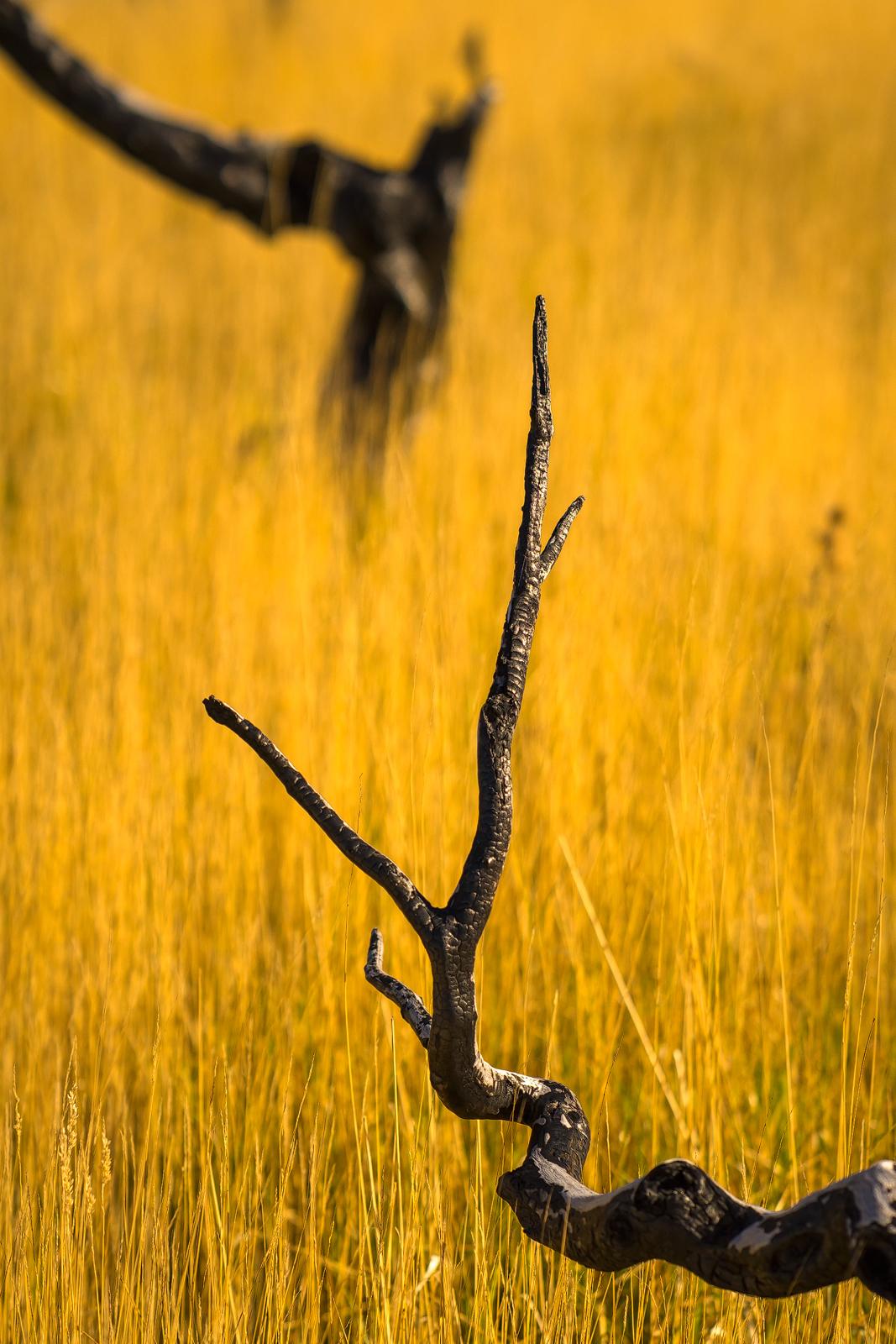 Nature - Photo 26