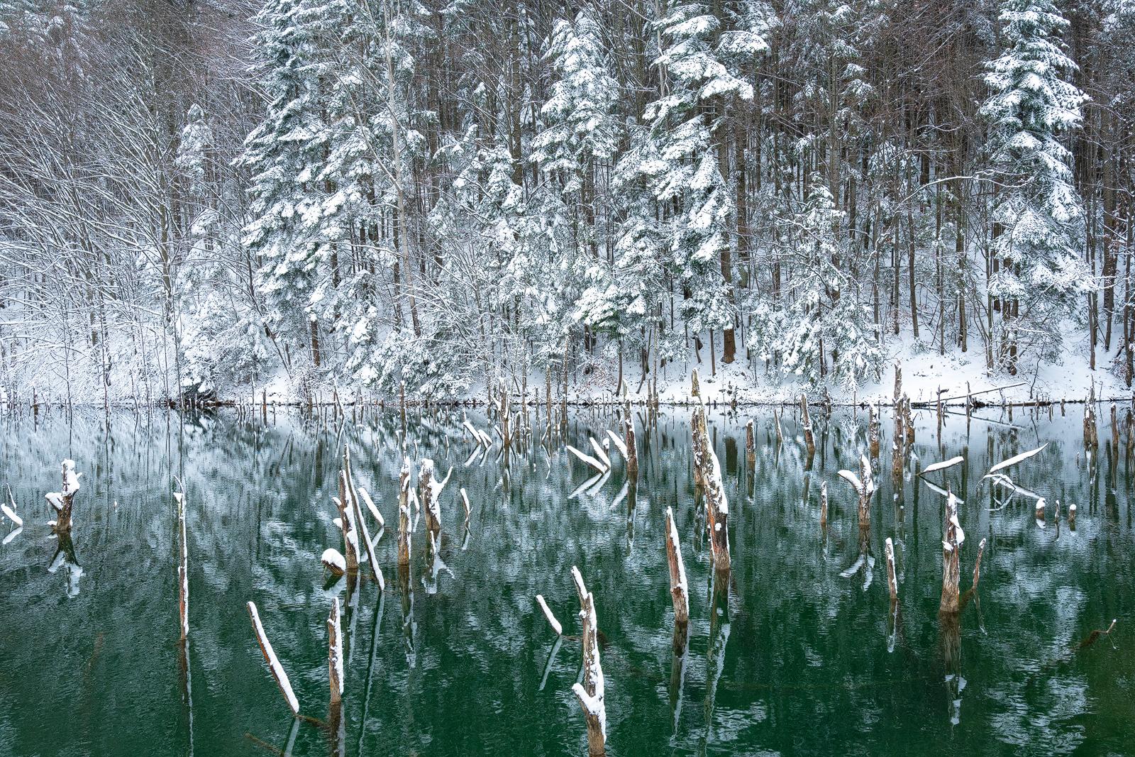 Nature - Photo 10