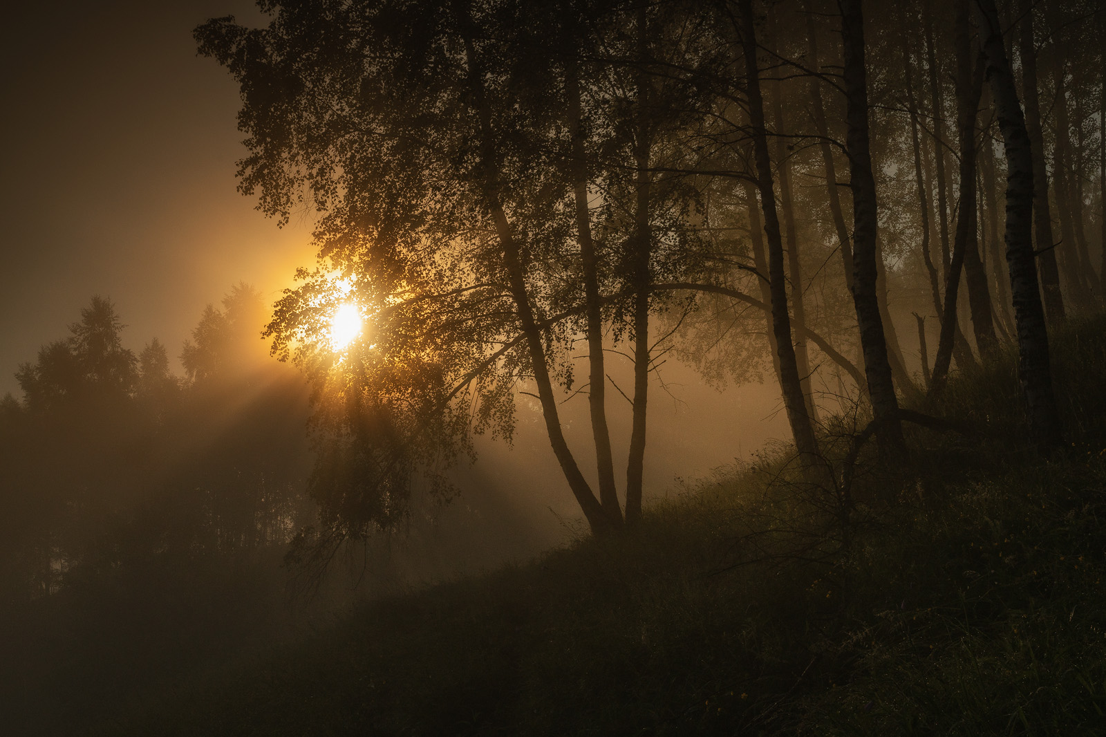 Nature - Photo 34