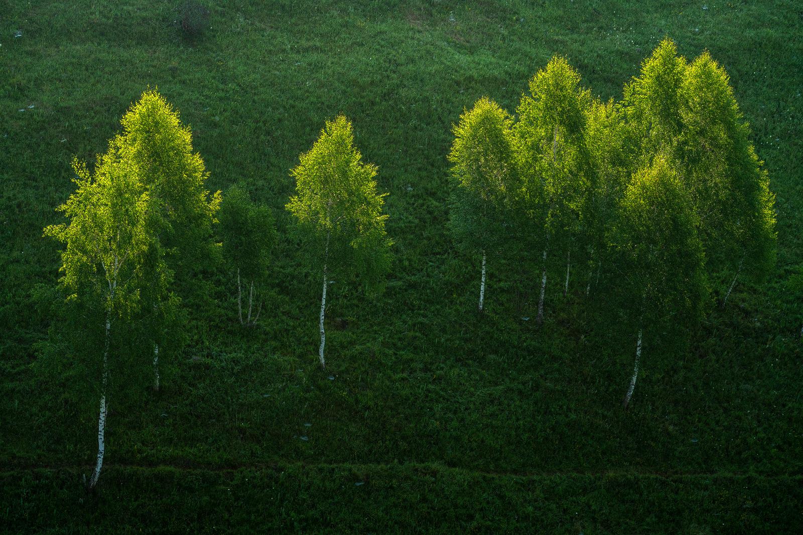 Nature - Photo 18