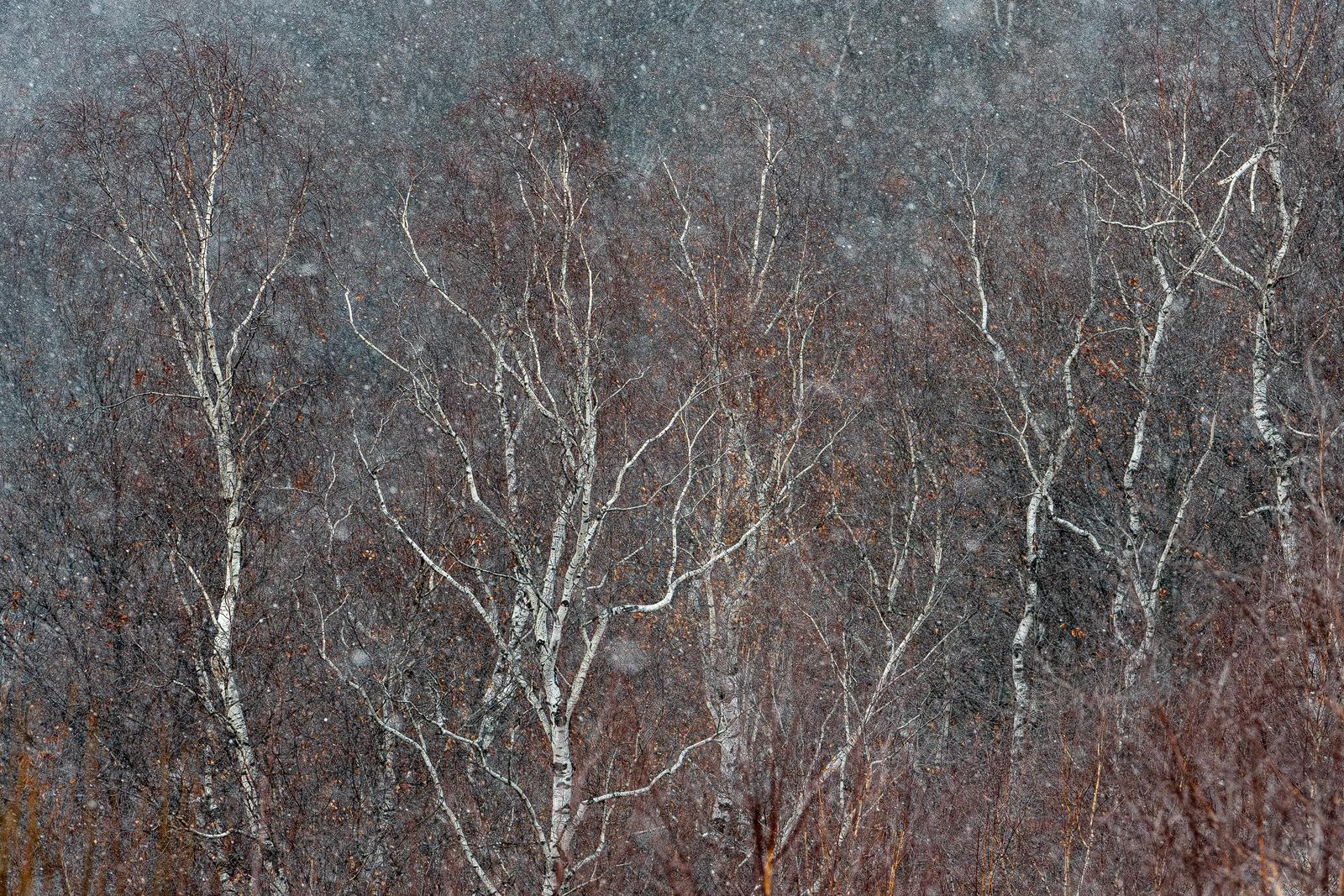 Nature - Photo 8