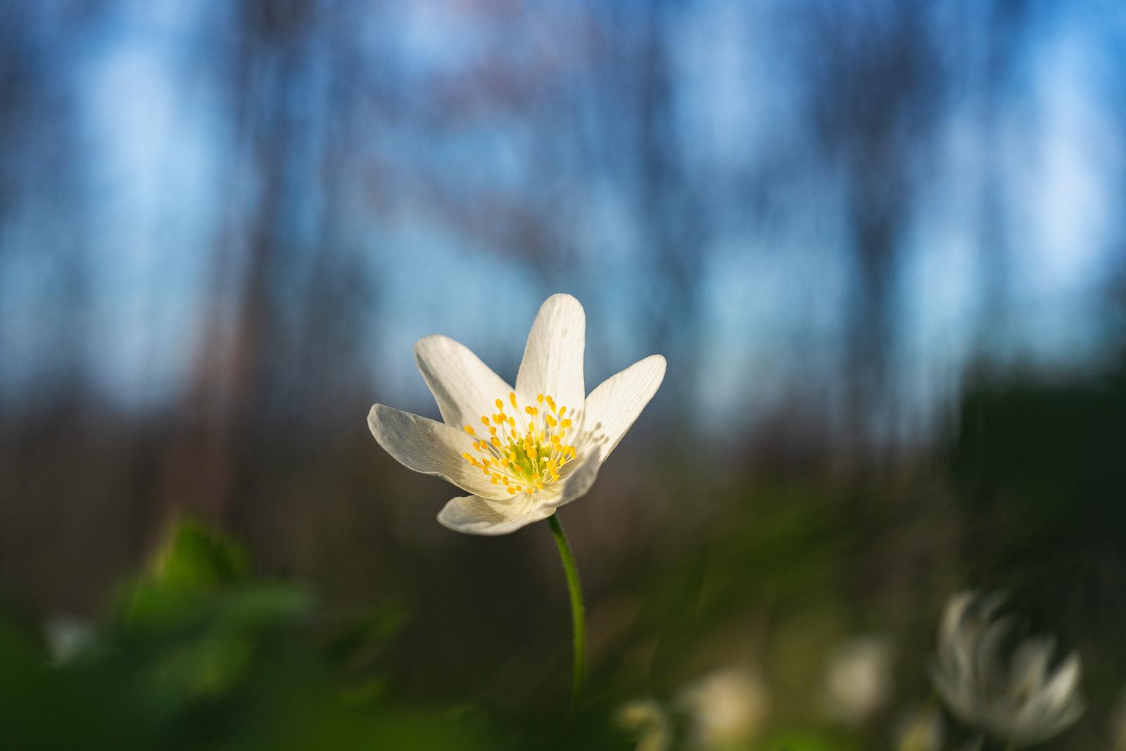 Nature - Photo 29