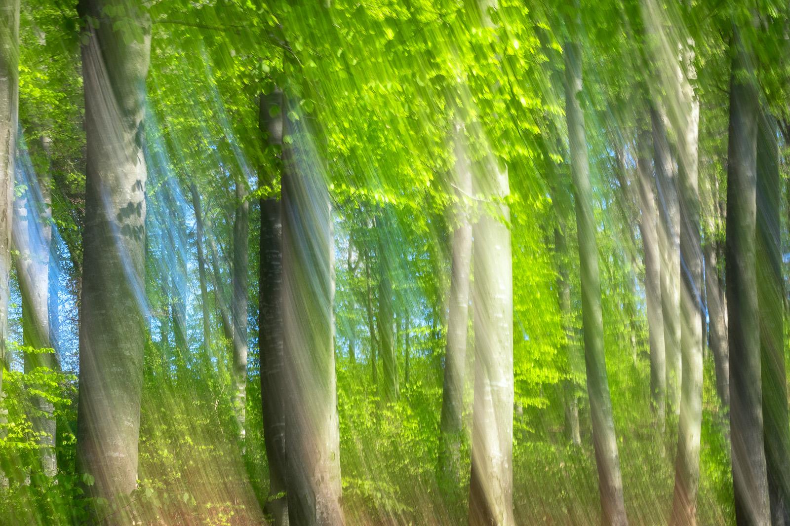 Nature - Photo 4
