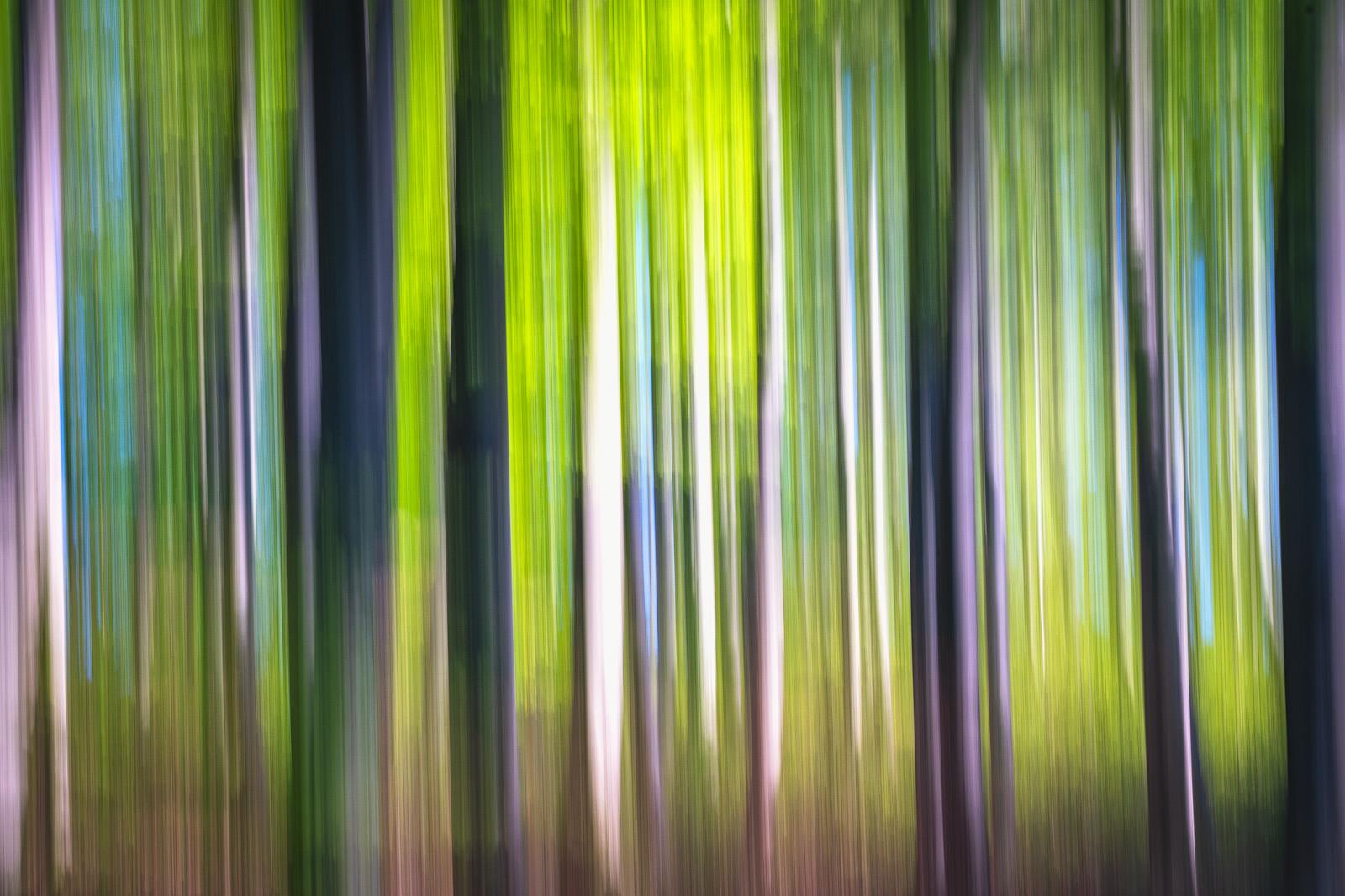 Nature - Photo 14