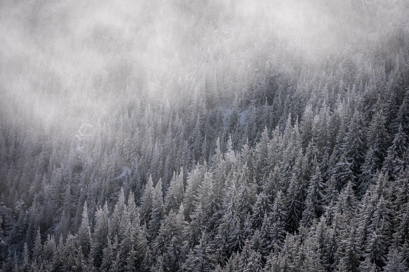 Nature - Photo 2