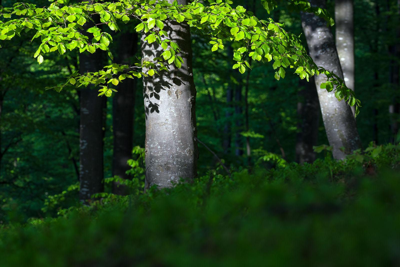 Nature - Photo 9