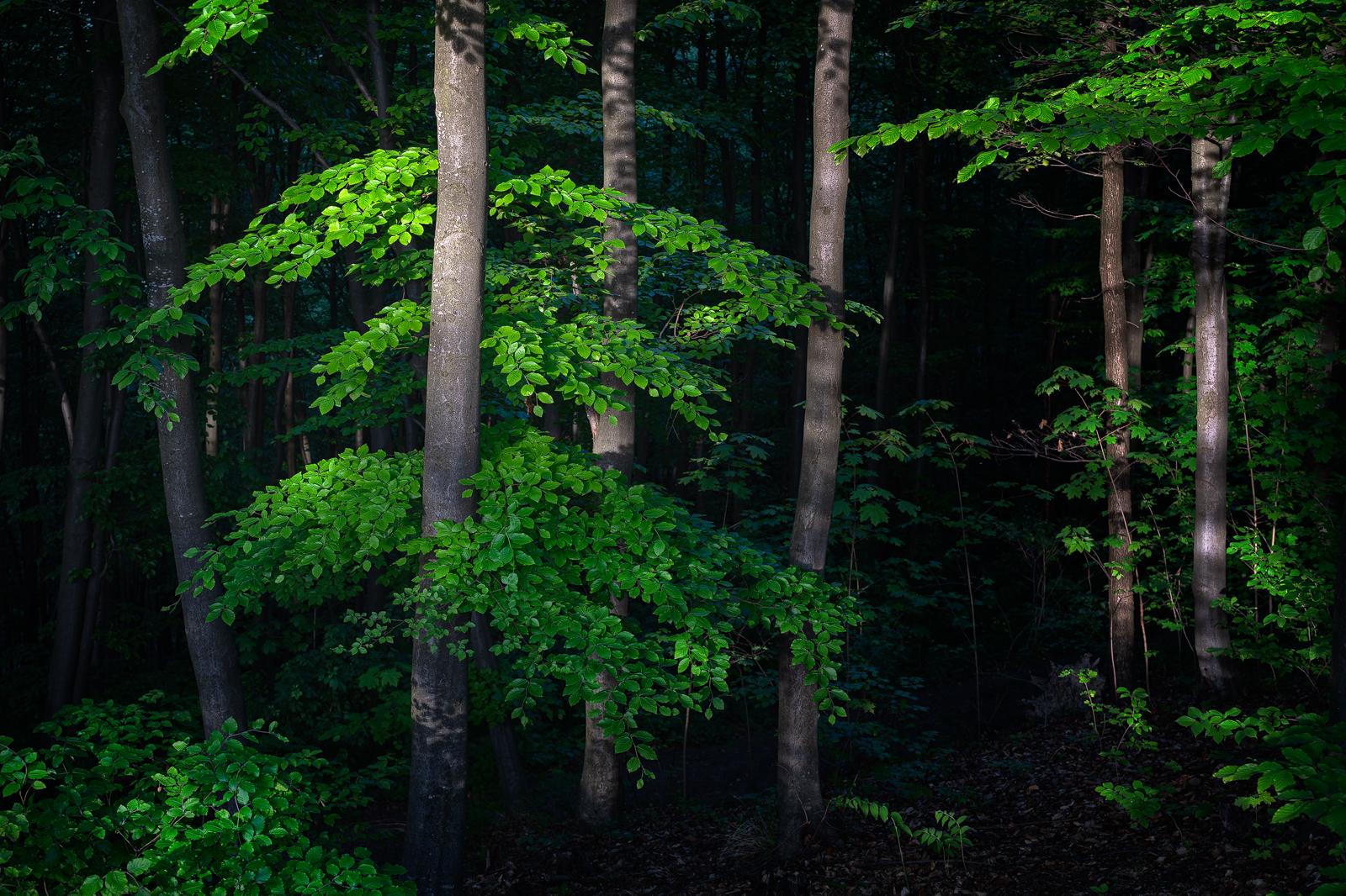 Nature - Photo 5
