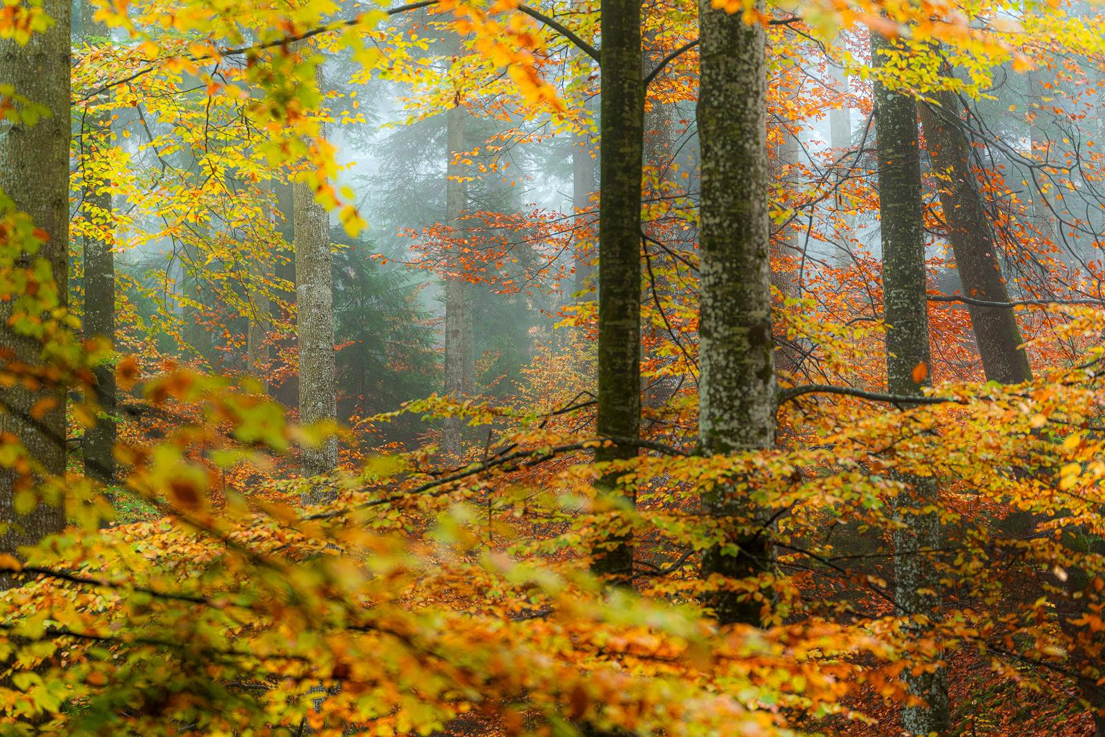 Nature - Photo 13