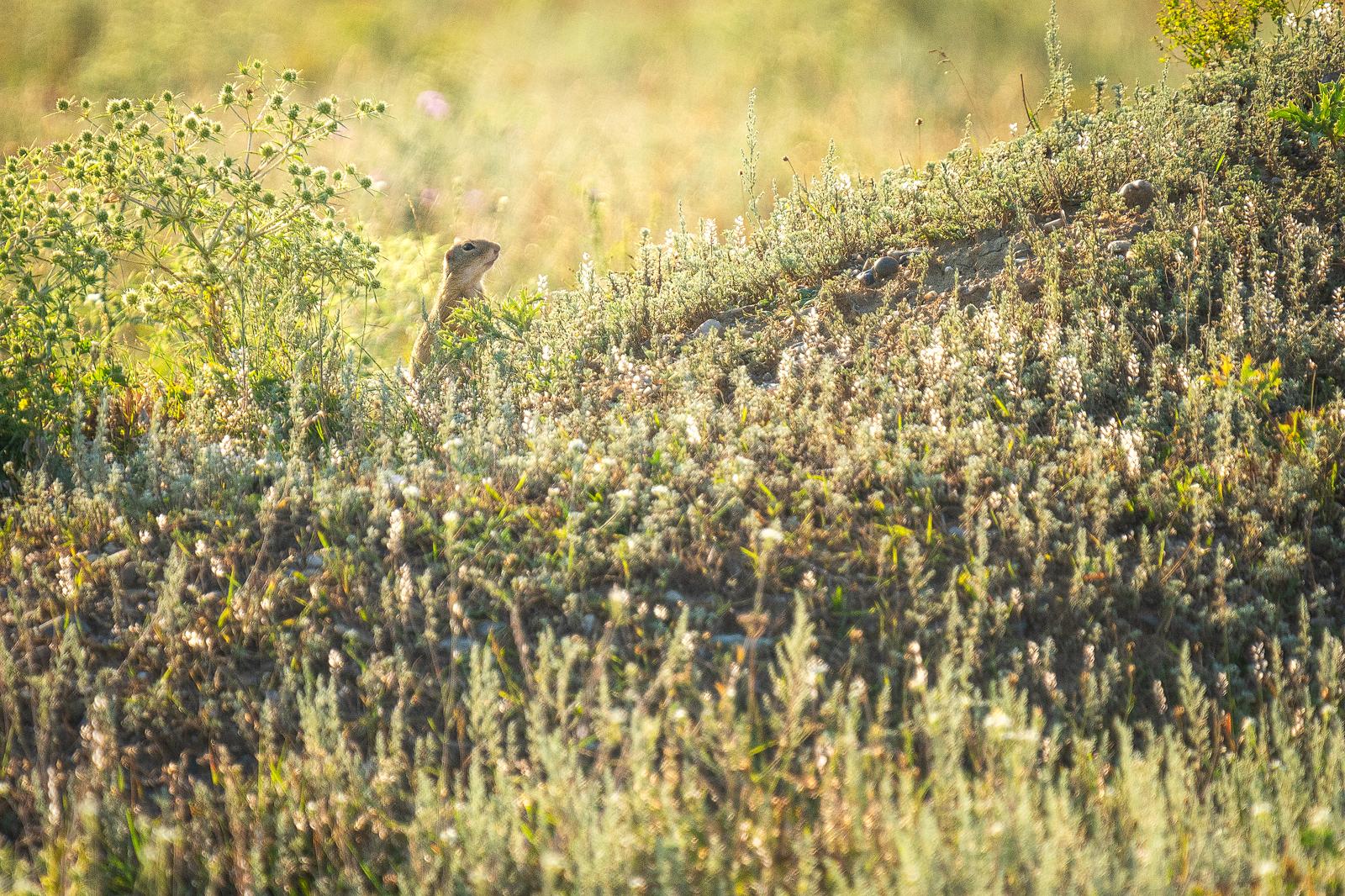 Wildlife - Photo 7