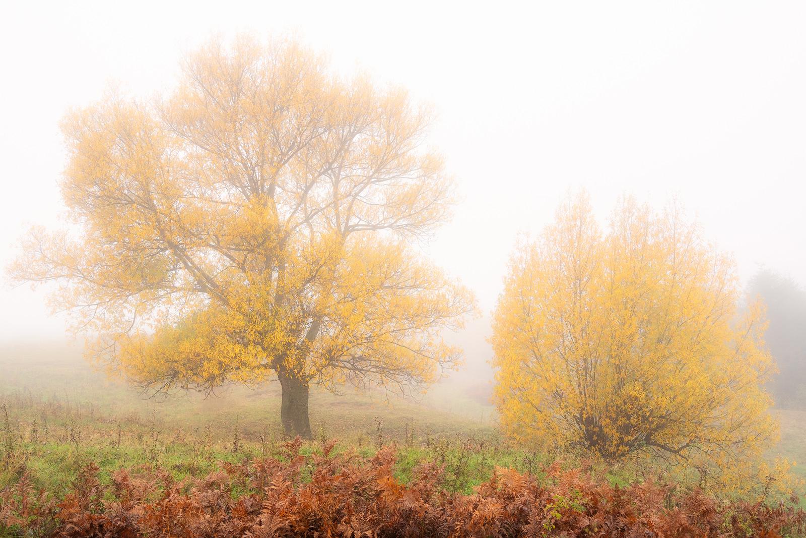 Nature - Photo 12