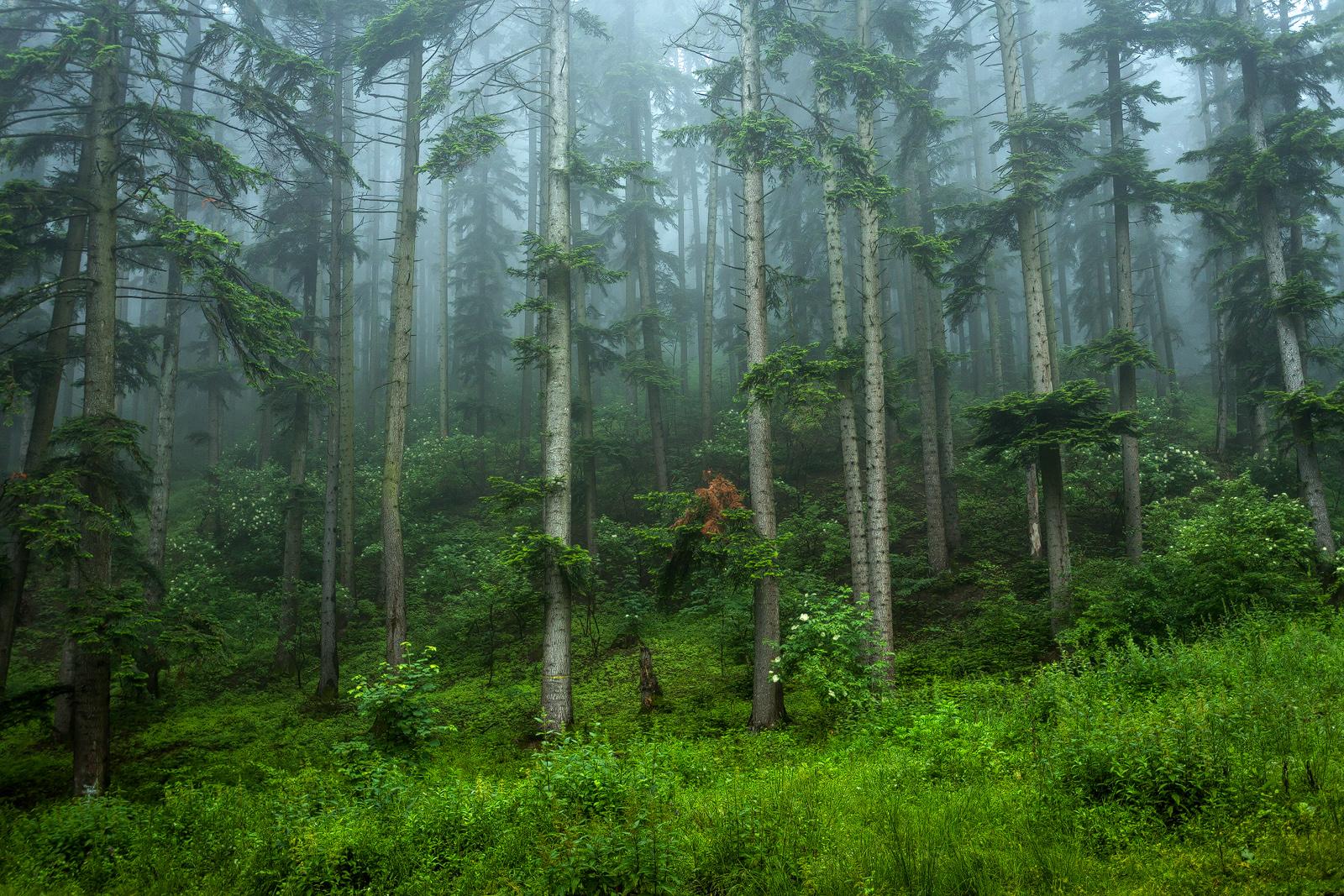 Nature - Photo 15