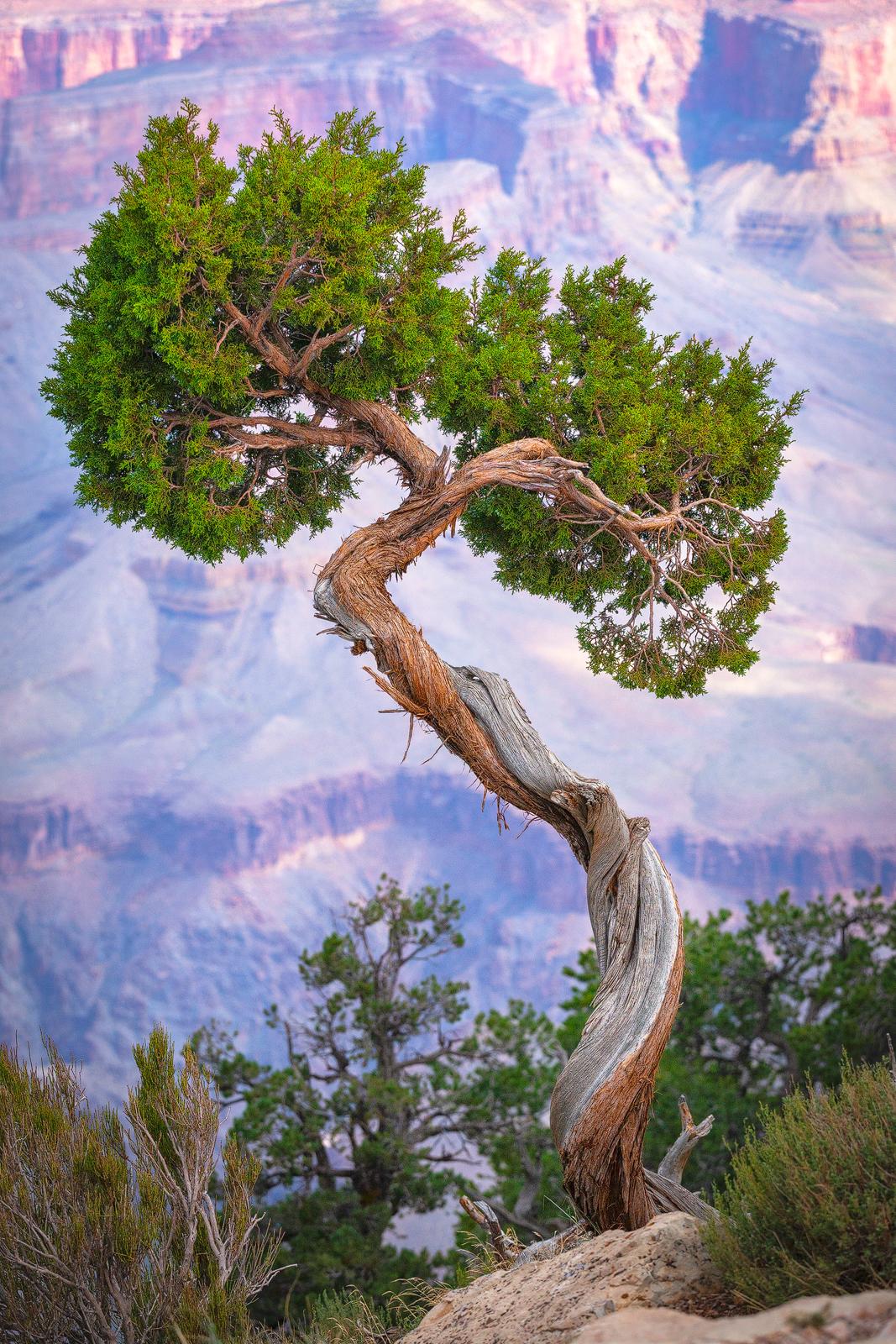 Nature - Photo 17